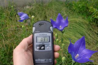 キキョウの花は毎年咲く。花の中に、時々クサグモが陣取っている。時に0.36まで上がる。