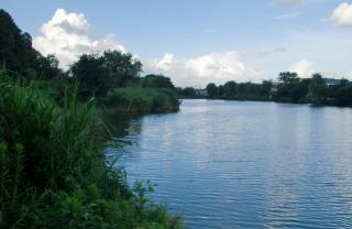水元公園の西の一画。対岸は三郷市